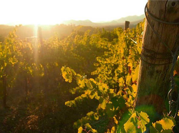 Masssanera Vineyard Sunset